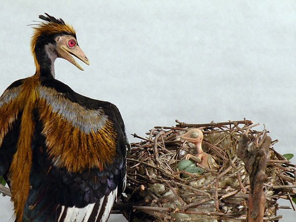 archaeopteryx nest hatchling feathered dinosaur