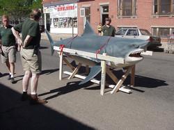Great white shark repair & remount