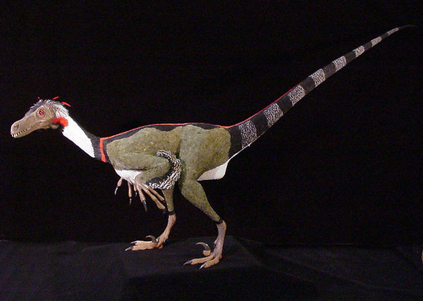 Velociraptor feathered reconstruction dinosaur