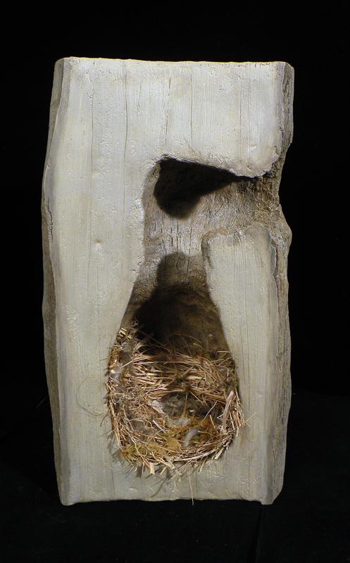 Cutaway woodpecker nest