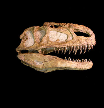 Monolophosaurus, dinosaur, fossil, paleo-art, sculpture