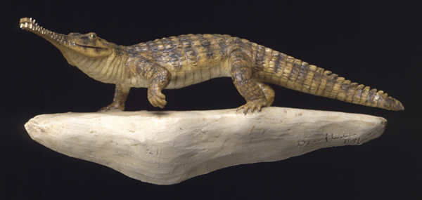 Rutiodon bas relief