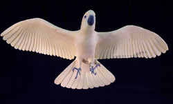 Moluccan cockatoo, carved