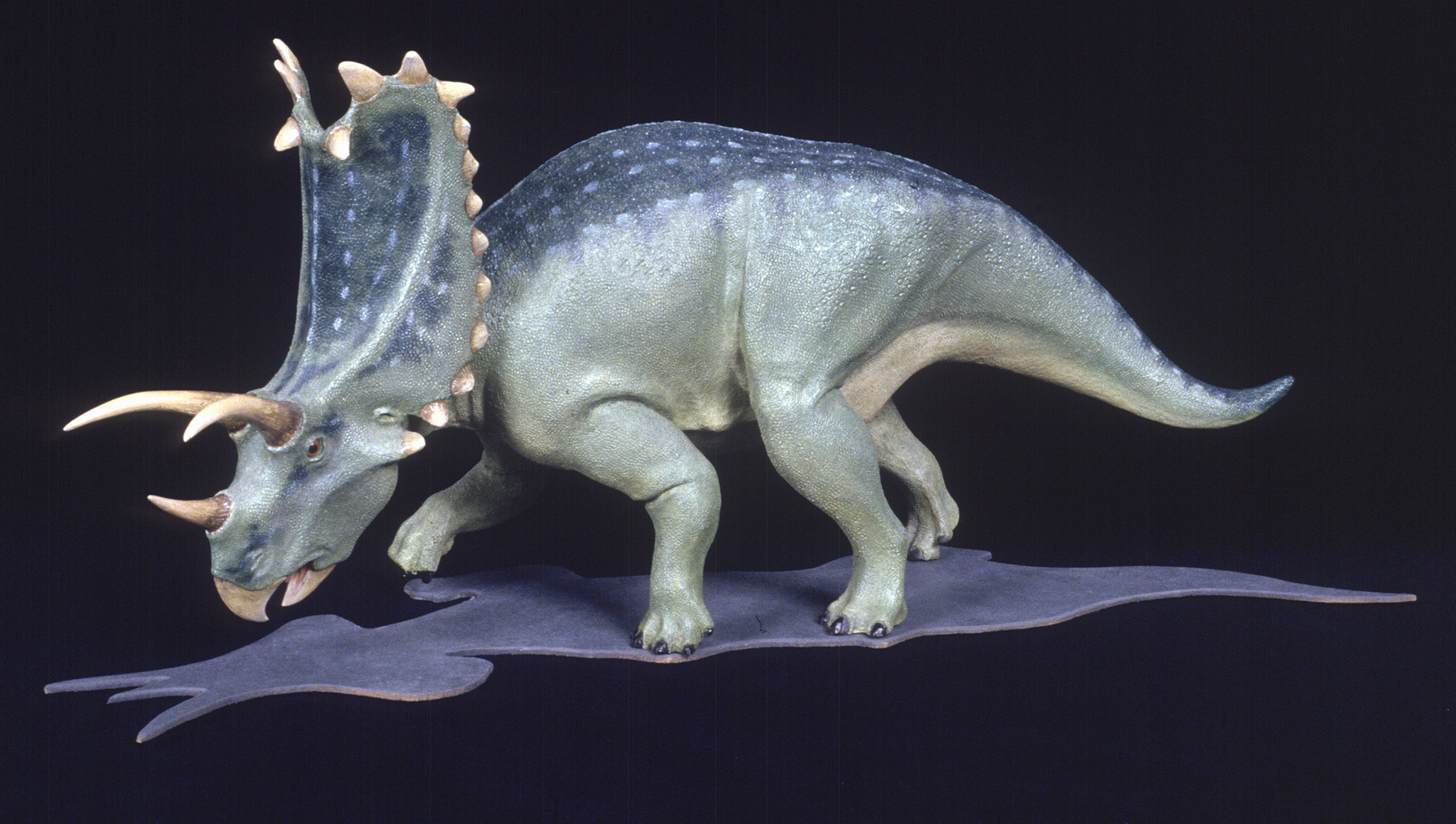 Pentaceratops reconstruction