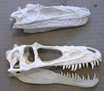 velociraptor skull cast dinosaur