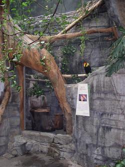 Hornbill habitat