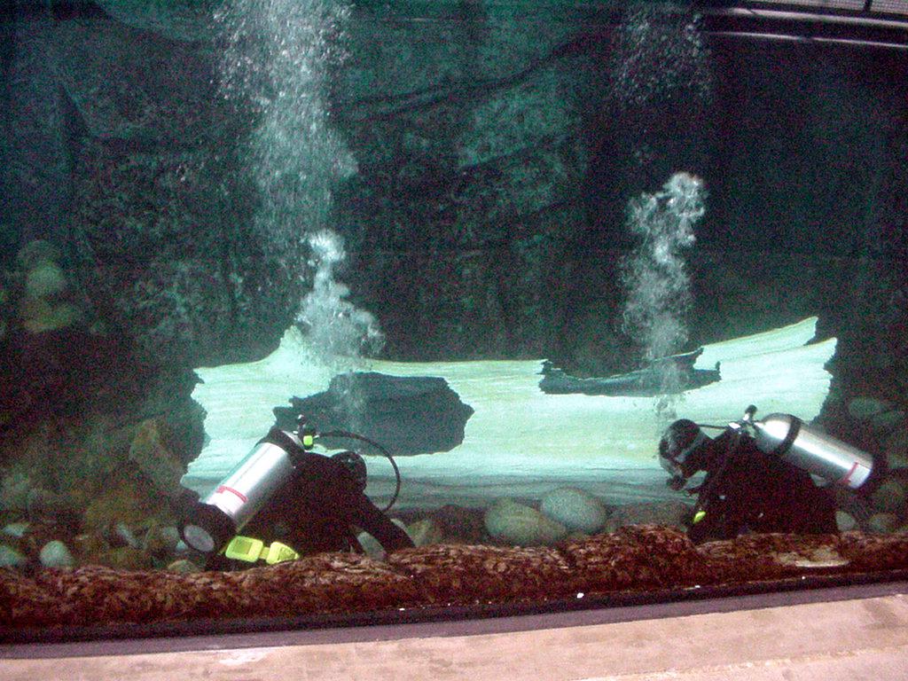 Sunken log, sea otter habitat