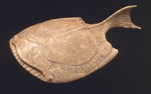 Drepsinapsis bas relief