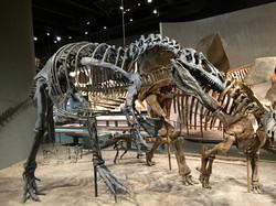 Allosaurus & Stegosaurus remount