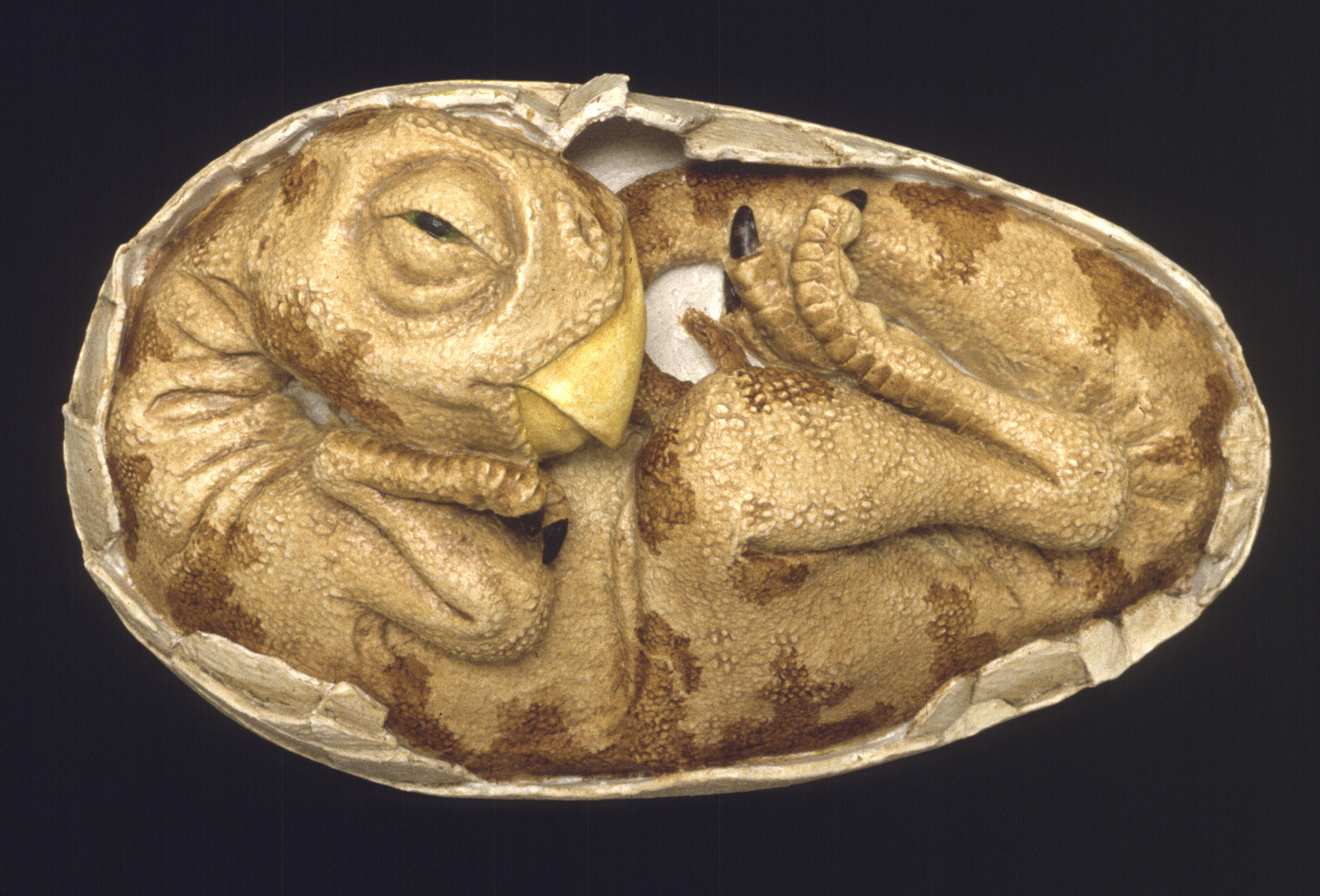 Oviraptor embryo sculpture
