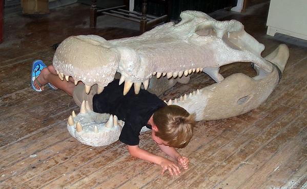 deinosuchus skull reconstruction