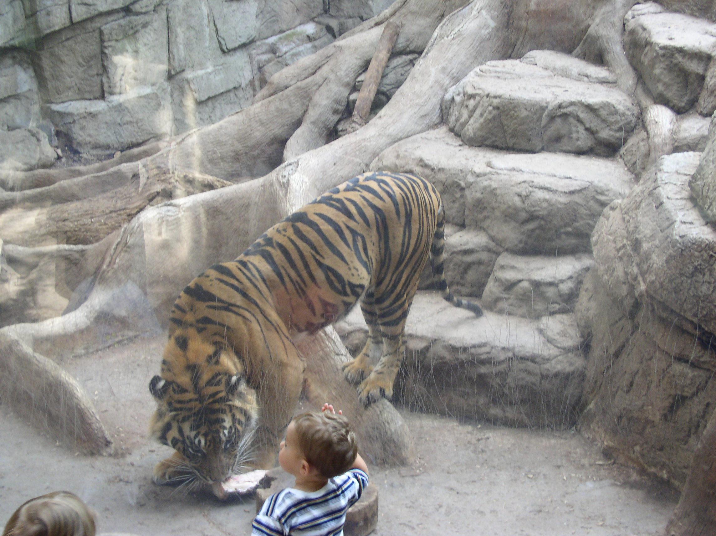 Stone & wood steps, tiger habitat