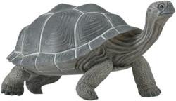 Galapagos tortoise toy