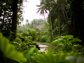 Amazon Forest produces more Co2 than absorbs