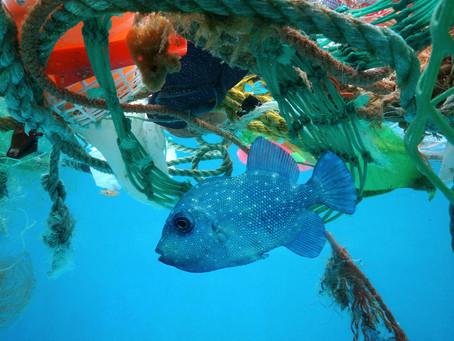 Plastic pollution threatening health of oceans | Money Talks