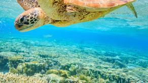 NSW Plastics Action Plan