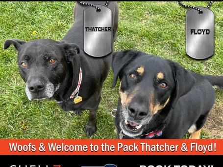 Welcome New Pack Members Thatcher, Floyd & Leia 🐶🐶🐶❤️🚨