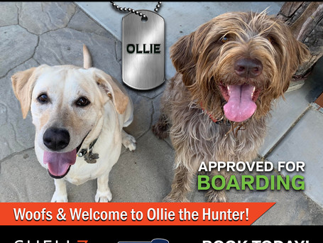 NEW PACK MEMBER ALERT | WELCOME OLLIE!
