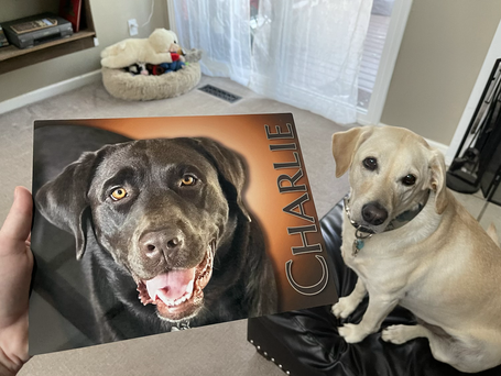 A Special Design & Photography Project For One Very Special Dog 🐶 ❤️