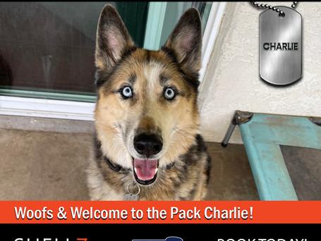 NEW PACK MEMBERS ALERT | BELLA & CHARLIE