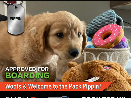 Welcome New Pack Member Pippin! 🐶❤️
