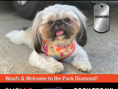 Welcome to 4 New Pack Members!