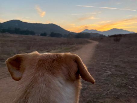 Consistent Dog Socialization is Key