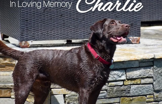FUREVER In Our Hearts ♥️ We Will Miss You Chocolate Charlie  🐾