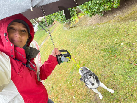 Rain or Shine - Tired Dogs are HAPPY DOGS!