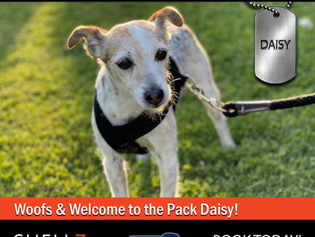 Welcome New Pack Member Daisy!