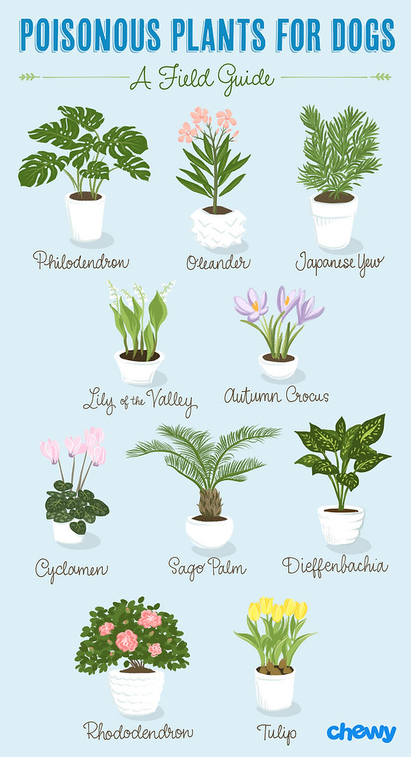 most-common-poisonous-plants-for-dogs (1