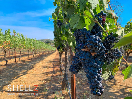 A DAY AT HATFIELD WINERY | PHOTOGRAPHY SHOOT