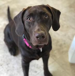 Labrador Rescuers