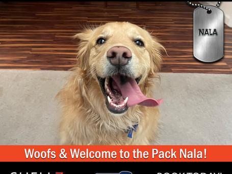 Welcome NEW Pack Members Nala, Tinkerbell, Stella, Luna & Tahoe