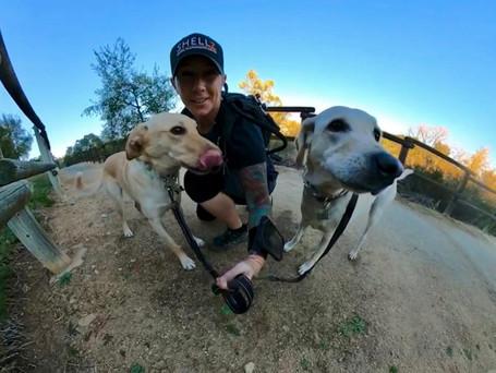 The SHELLZ Dog Walking & Dog Sitting Difference