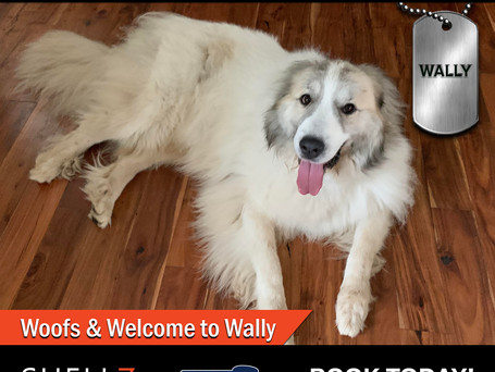 New Pack Member Alert | Cheers for Great Pyrs!