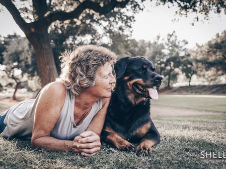 Rottweiler Photoshoot | Pet Photography