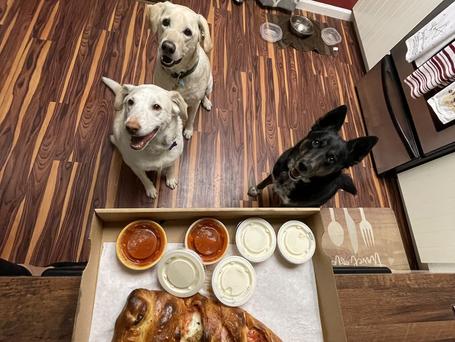 Sadie & Dodger's Staycation