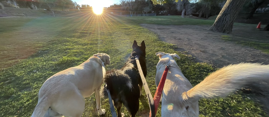 8 Dogs Makes For One PAWSOME Friday! 🐶❤️🎉🥰