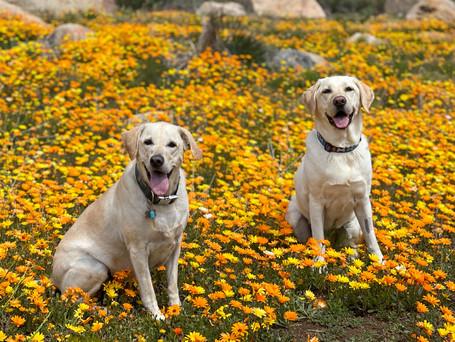 Dogs Like Wildflowers Too!