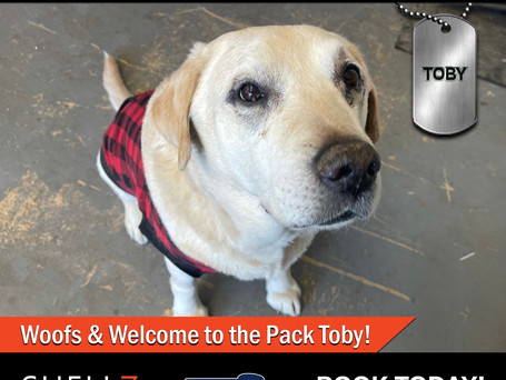NEW PACK MEMBER ALERT Welcome Toby! 🐶❤️😍🎉