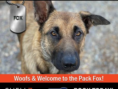 Welcome New Pack Members Fox & Sierra!