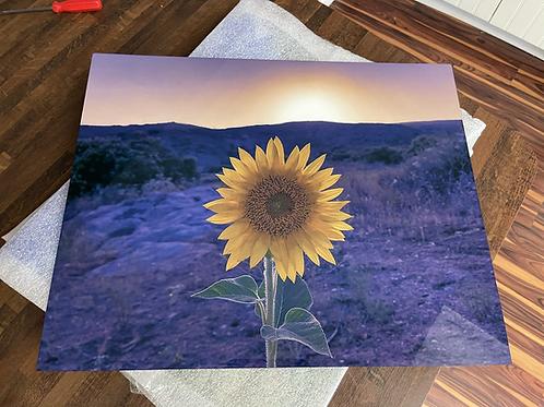 Simon's Sunflower | Metal Print | 16x20