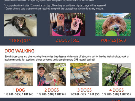 Dog Sitting, Dog Walking & Drop In Care | Rates & Services Update