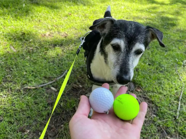 1 HR DogPark Session With Tucker & Golf with Huey