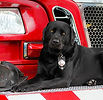 Firehouse-dog-Smokey-6070.jpg