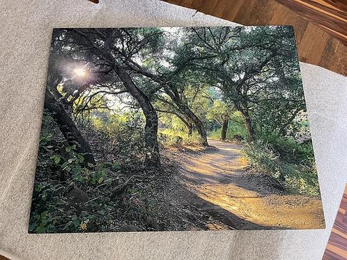 Shady Oaks Trail Sunset   Metal Print   16x20