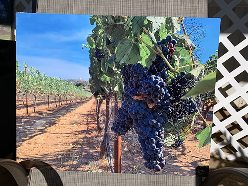 Wine is Ready | 16 x 20 on Metal