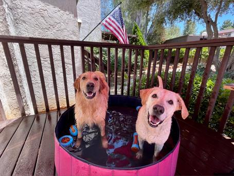 Memorial Day Weekend Fun | Archer & Roxy's Staycation