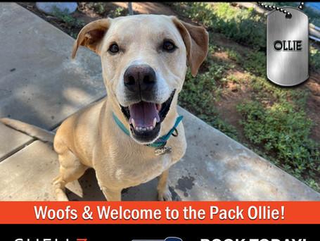 Welcome New Pack Members Ollie & Bear